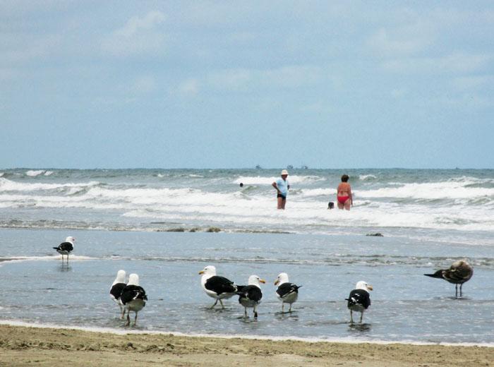 Foto van meeuwen mensen aan zee