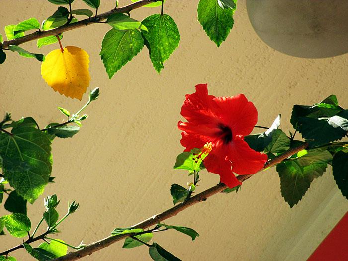 Foto van rode bloem en takken met groene en een geel blad