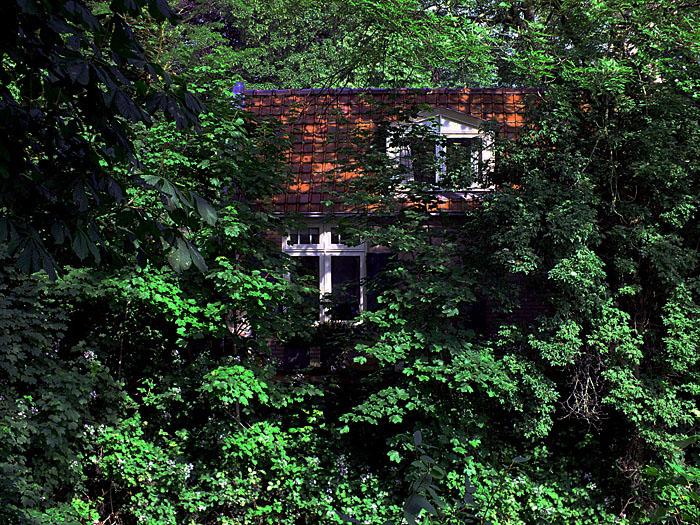 Foto van huis tussen groen