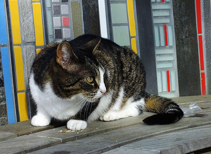 Foto van kat op bank met mozaïek