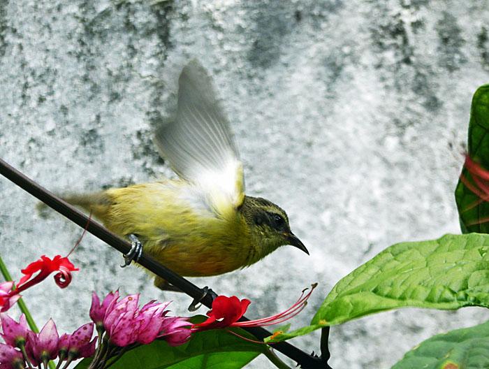 Foto van vogeltje op tak dat net weg wil vliegen