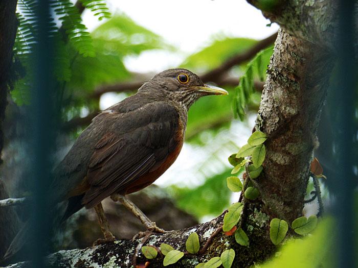 Foto van vogel op tak