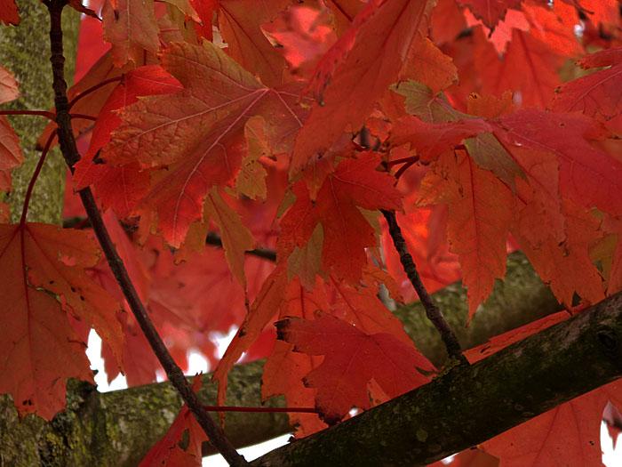 Foto van roodoranje herfstbladeren