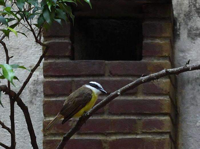 Foto van geelbruine vogel