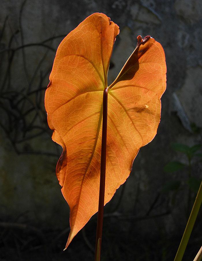 Foto van blad van plant