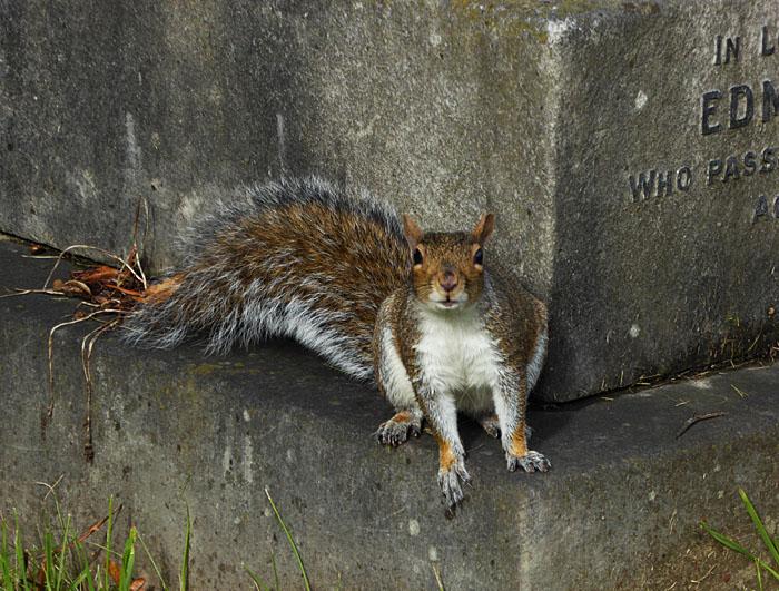 Foto van eekhoorn