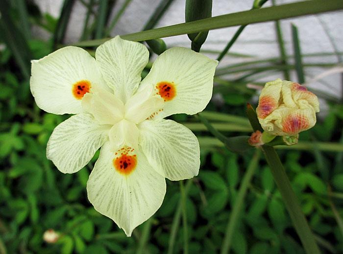 Foto van bloem en knop