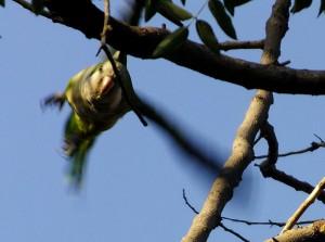 Foto van vliegende papegaai