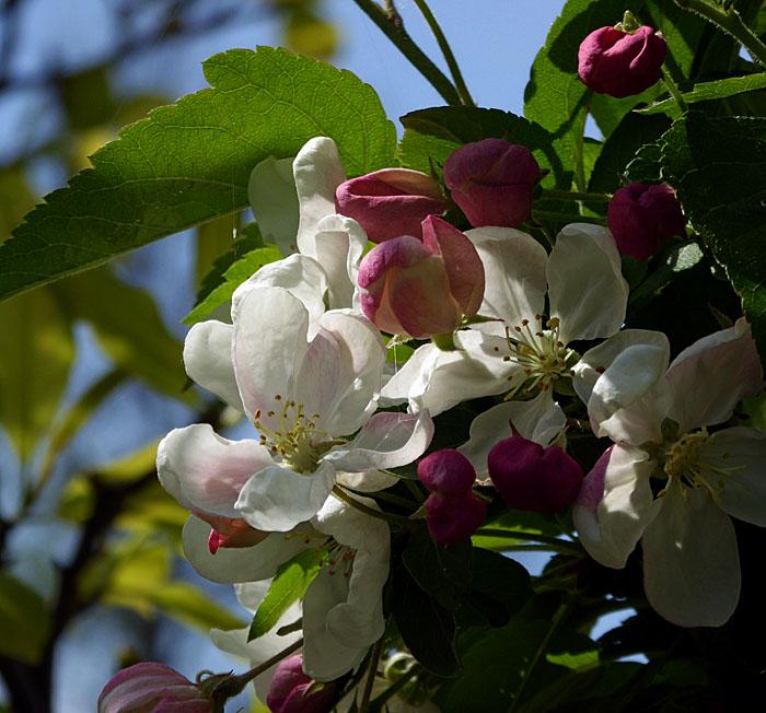 Foto van roze en witte bloesem