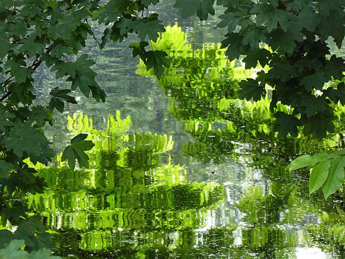 Foto van groene bladeren en reflex in water
