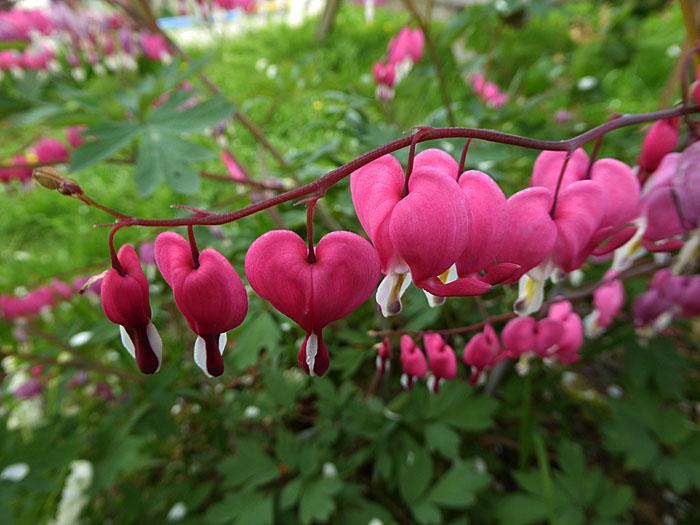 Foto van roze bloemetjes