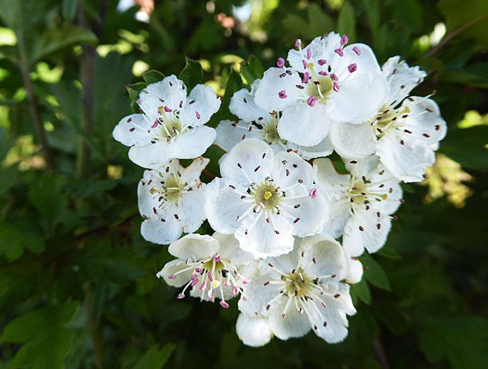 Foto van witte bloemetjes