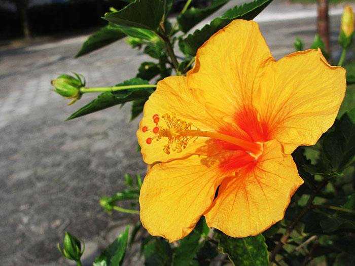 Foto van geel en oranje bloem