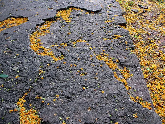 Foto van gele bloetjes tussen asfalt