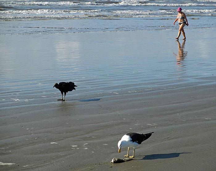 Foto van gier, meeuw en badgast op strand