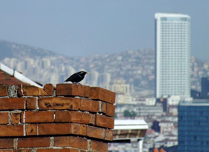 Foto van klein zwart vogeltje op schoorsteen