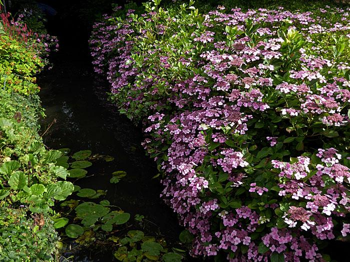 Foto van beekje en bloemetjes