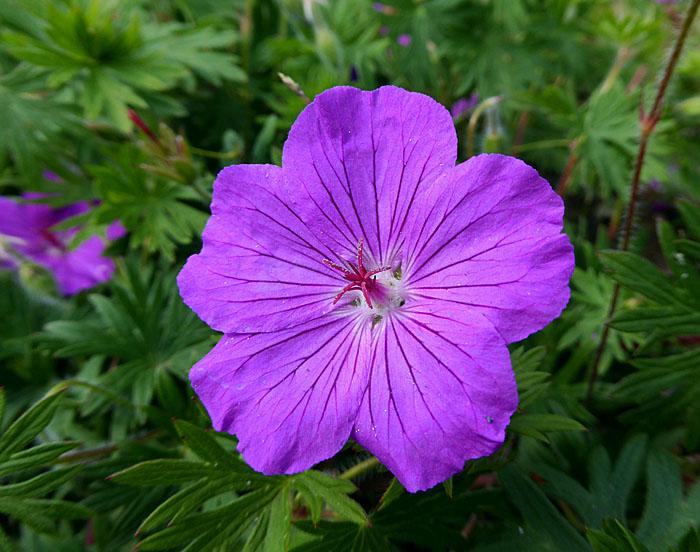 Foto van paarse bloem