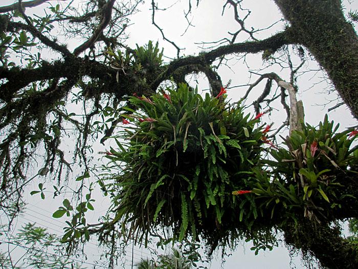 Foto van planten, groeiend op boom