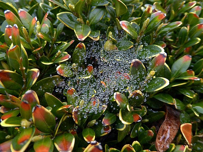 Foto van druppels op planten