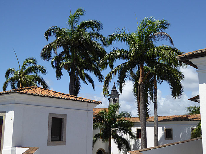 Foto van witte gebouwen en palmen