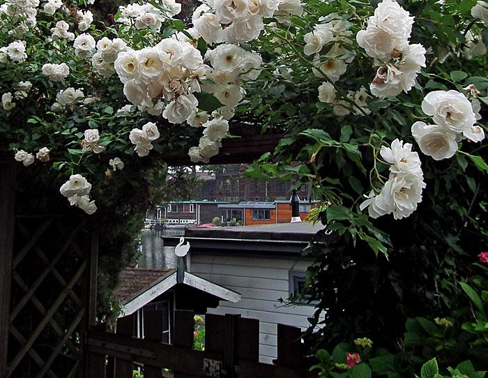 Foto van woonboten en bloemenboog