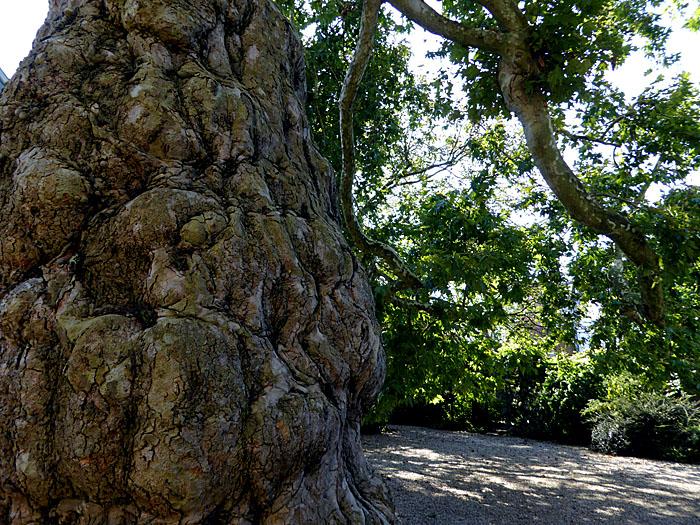 Foto van deel van dikke boomstam