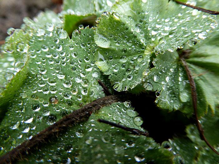 Foto van druppels op groen blad