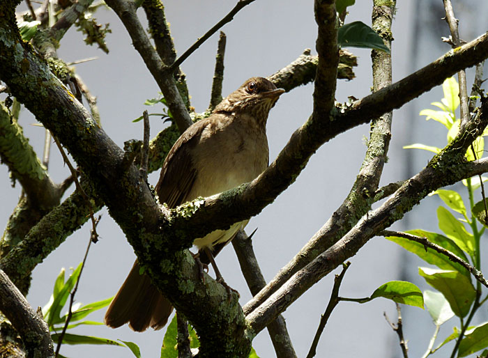 Foto van vogel in boom