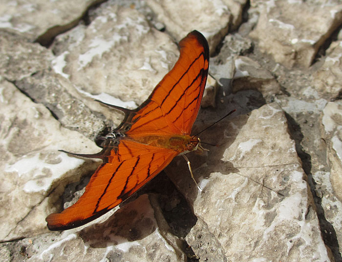 Foto van oranje vlinder
