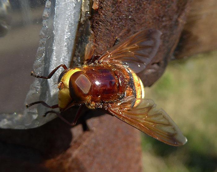 Foto van insect