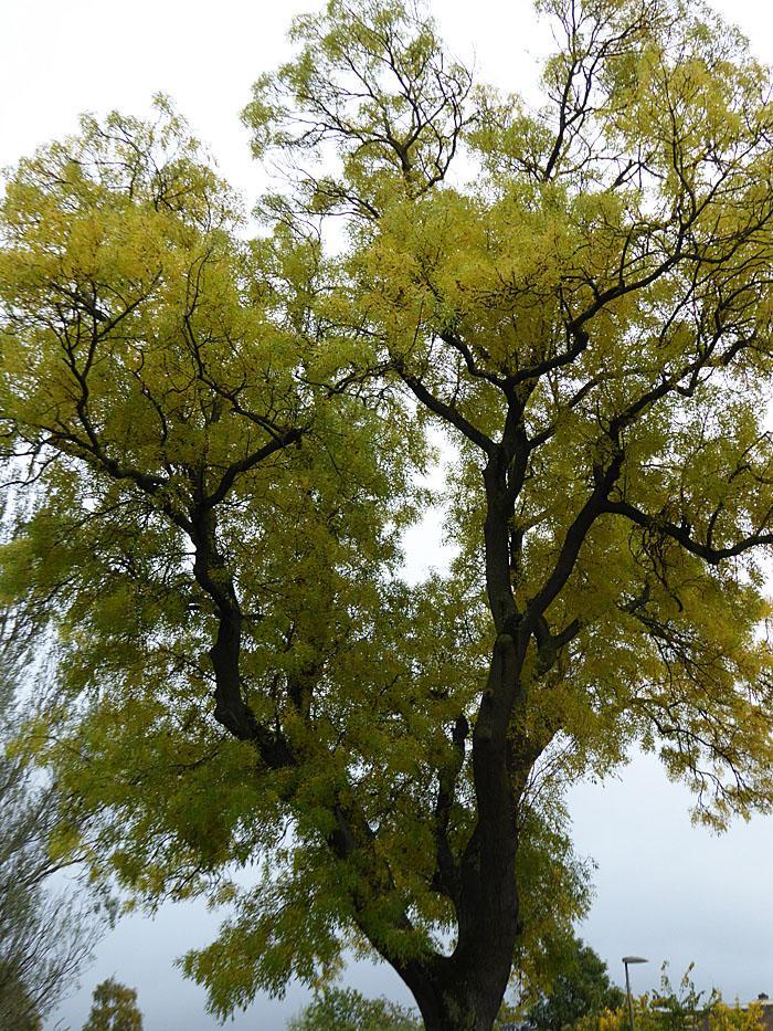 Foto van boom met vergelend blad