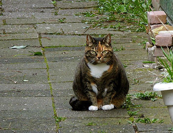 Foto van kat in steeg