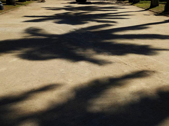 Foto van schaduw van palmen