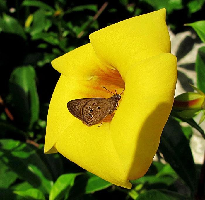 Foto van vlinder in gele bloem