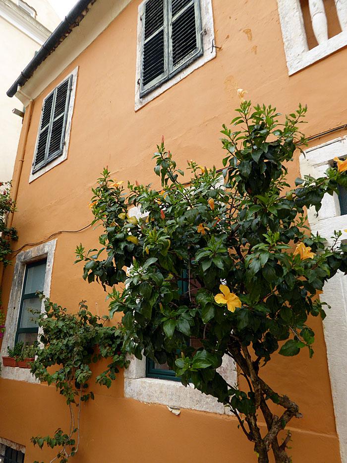 Foto van boom met bloemen voor huis