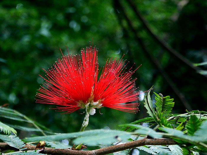 Foto van sprietige rode bloem
