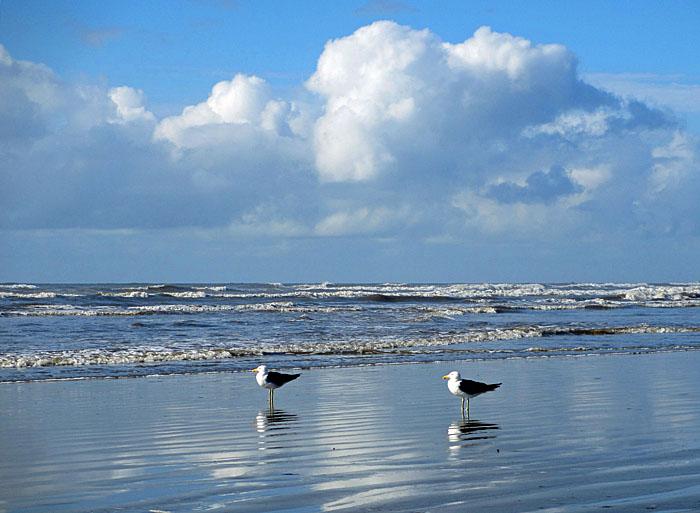 Foto van meeuwen bij zee