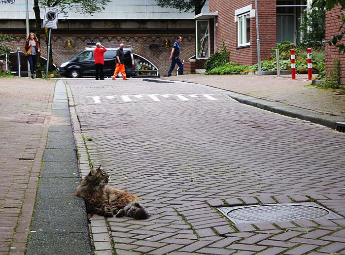 Foto van kat op rijweg