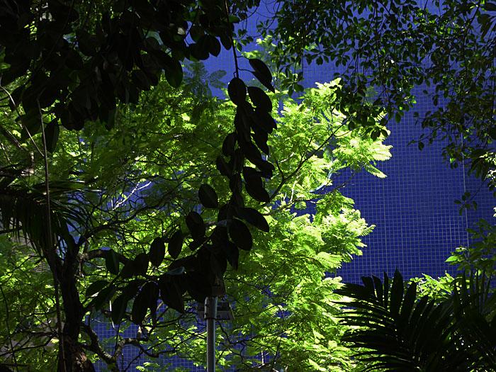Foto van bomen voor blauwe muur