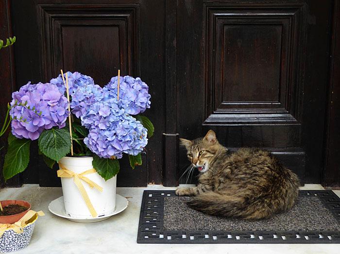 Foto van kat naast plant