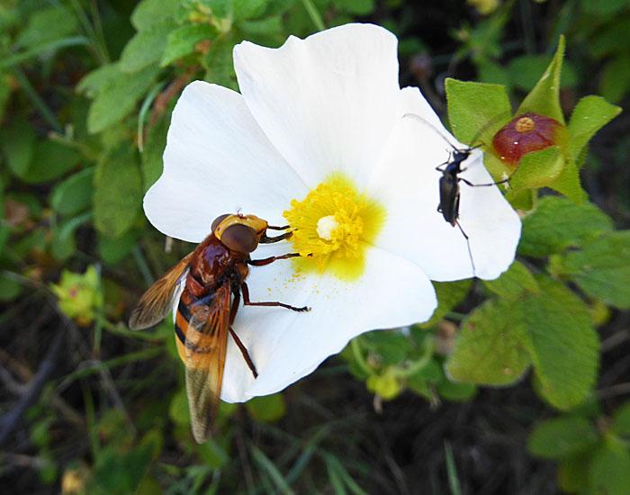 Foto van inscten op bloem