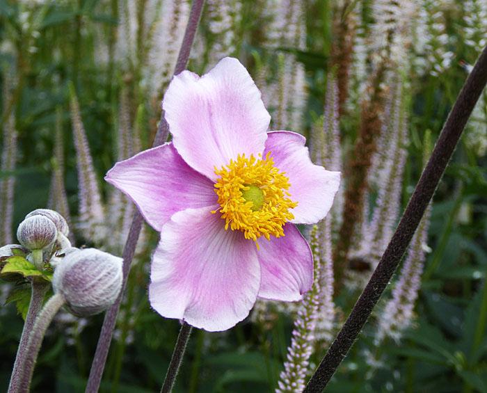 Foto van roze bloem