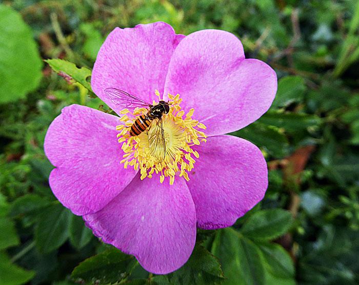 Foto van bloem met insect