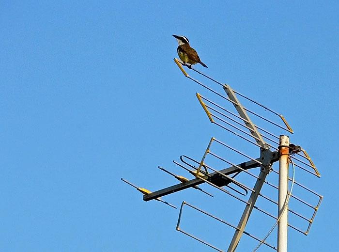 Foto van kiskadie op antenne