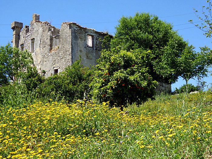 Foto van ruïne en gele bloemen