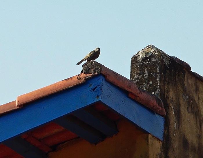 Foto van vogel op dak