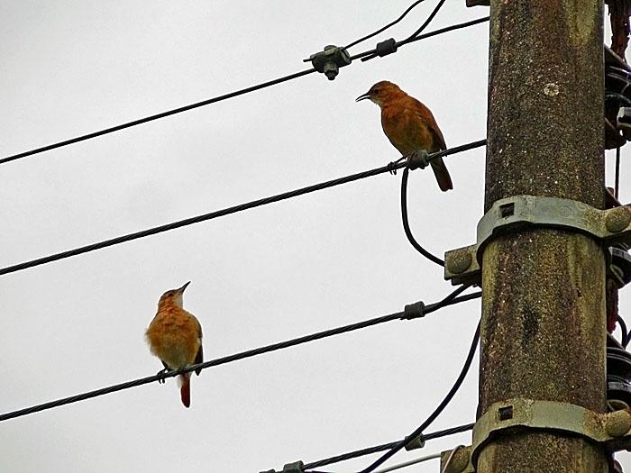 Foto van vogels op elektriciteitsdraden