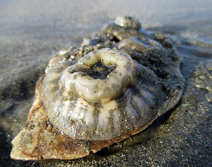 Foto van leven uit zee aangespoeld op het strand