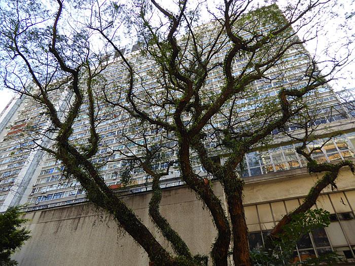 Foto van grillige boom voor gebouw